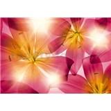 Fototapety lilie rozměr 368 cm x 254 cm