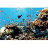 Fototapety korálový útes rozměr 254 cm x 184 cm