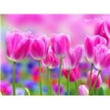 Vliesové fototapety tulipány rozměr 312 cm x 219 cm