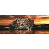Vliesové fototapety jaguár