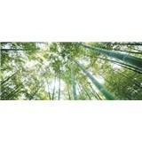 Vliesové fototapety les - SLEVA