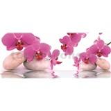 Vliesové fototapety orchidej s kameny rozměr 250 cm x 104 cm