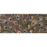 Vliesové fototapety paví peří rozměr 250 cm x 104 cm