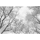 Fototapety vrcholky stromů rozměr 366 cm x 254 cm - POSLEDNÍ KUSY