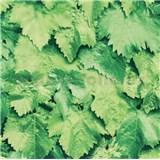 Samolepící tapety zelené listí 45 cm x 15 m