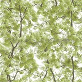Vliesové tapety na zeď Home rozkvetlé stromy zelené