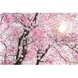 Vliesové fototapety rozkvetlý strom rozměr 368 cm x 248 cm