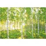 Vliesové fototapety les břízy rozměr 368 cm x 248 cm