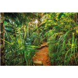 Fototapety Jungle Trail