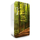 Samolepící tapety na lednici les na podzim rozměr 120 cm x 65 cm