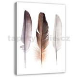 Obraz na plátně peříčka 40 x 60 cm
