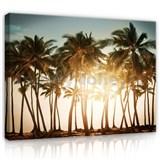 Obraz na plátně palmy při západu slunce 70 x 50 cm