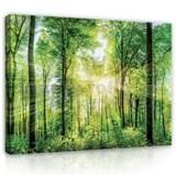 Obraz na plátně sluneční paprsky mezi stromy 152 x 98 cm