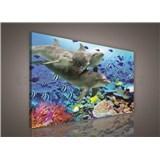 Obraz na plátně delfíni 75 x 100 cm