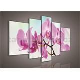 Obraz na plátně orchidej 170 x 100 cm