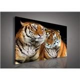 Obraz na plátně tygři 100 x 75 cm