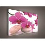 Obraz na plátně orchidej růžová 75 x 100 cm