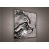 Obraz na plátně kočka 80 x 80 cm