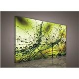 Obraz na plátně ranní rosa zelená 75 x 100 cm