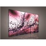 Obraz na plátně ranní rosa růžová 75 x 100 cm