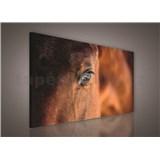 Obraz na plátně kůň 75 x 100 cm