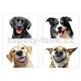Samolepky na zeď selfie veselí psi rozměr 45 x 65 cm
