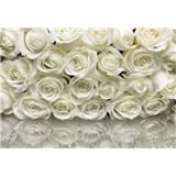 Fototapety růže bílé