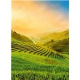 Fototapety terasovité rýžové pole ve Vietnamu rozměr 184 cm x 254 cm