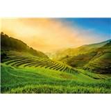 Vliesové fototapety terasovité rýžové pole ve Vietnamu rozměr 368 cm x 254 cm