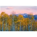 Vliesové fototapety břízy a hory rozměr 368 cm x 254 cm