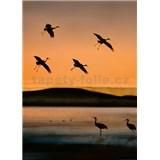 Vliesové fototapety ptáci při západu slunce rozměr 184 x 254 cm
