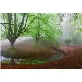 Vliesové fototapety les v mlze rozměr 368 cm x 254 cm