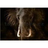 Vliesové fototapety slon rozměr 368 cm x 254 cm - POSLEDNÍ KUSY