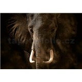 Fototapety slon rozměr 368 cm x 254 cm