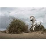 Fototapety divoký bílý kůň rozměr 368 cm x 254 cm