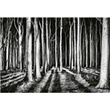 Vliesové fototapety tajemný les rozměr 368 x 254 cm