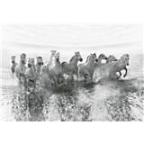 Vliesové fototapety bílé koně rozměr 368 x 254 cm