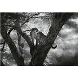 Fototapety leopard na stromě rozměr 368 x 254 cm