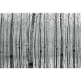Vliesové fototapety březový les ve vodě rozměr 368 cm cm x 254 cm