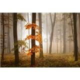 Vliesové fototapety podzimní les v mlze rozměr 368 cm x 254 cm