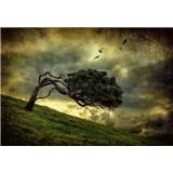 Vliesové fototapety děsivý strom rozměr 368 x 254 cm