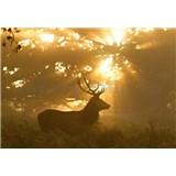 Vliesové fototapety jelen rozměr 368 cm x 254 cm - POSLEDNÍ KUSY