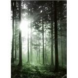 Fototapety sluneční paprsky v lese rozměr 184 cm x 254 cm