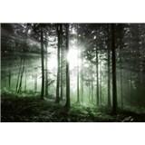 Vliesové fototapety sluneční paprsky v lese rozměr 368 cm x 254 cm