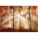 Vliesové fototapety les na podzim 312 cm x 219 cm