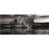 Vliesové fototapety jaguár černobílý