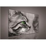 Obraz na plátně kočka 75 x 100 cm